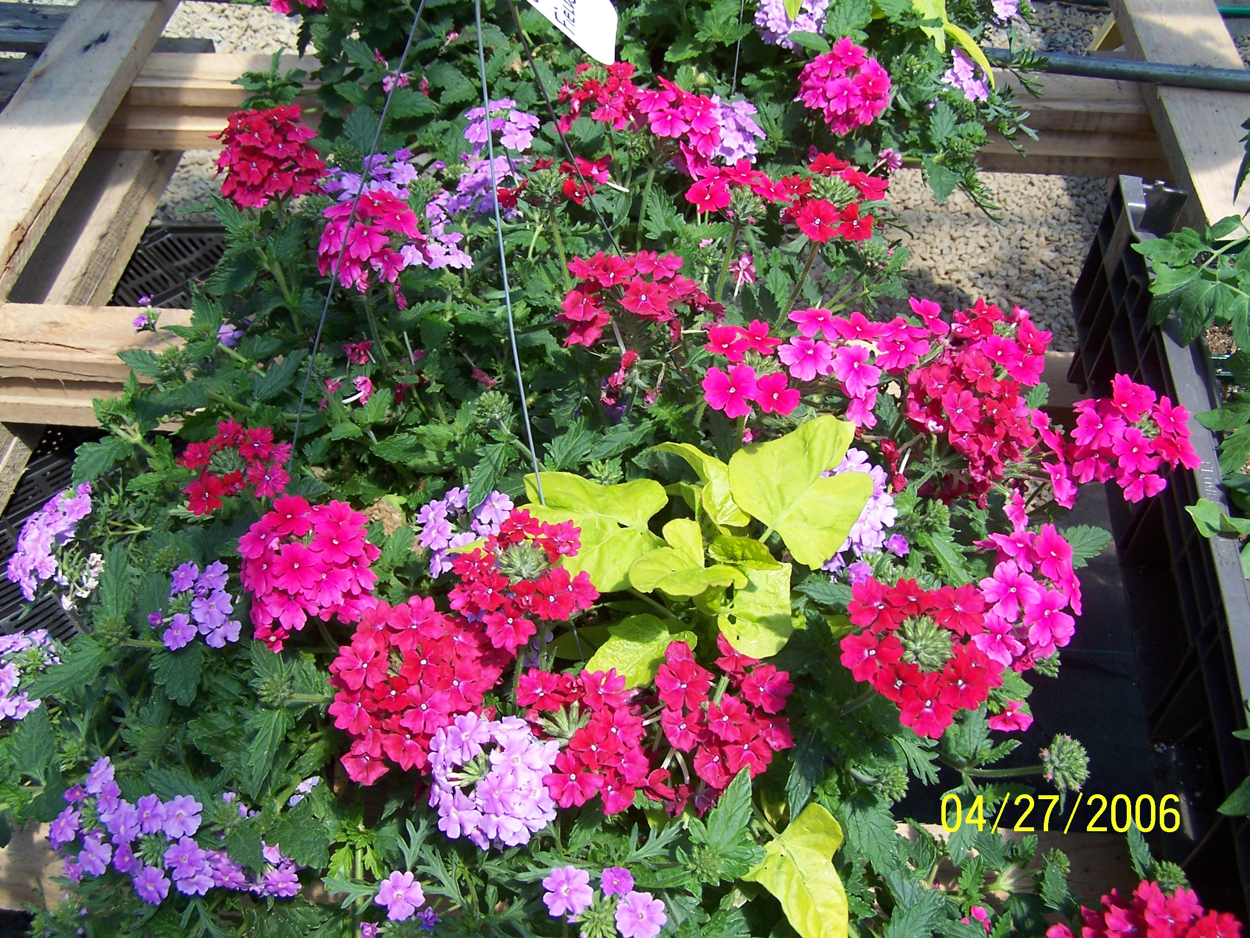 Best Flower Combinations For Hanging Baskets : Best annuals for hanging baskets joe s musings