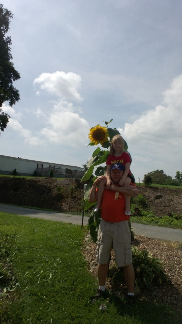 This is my firend Lauren getting her picture made with a large sunflower head.