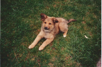 Sparky as a pup
